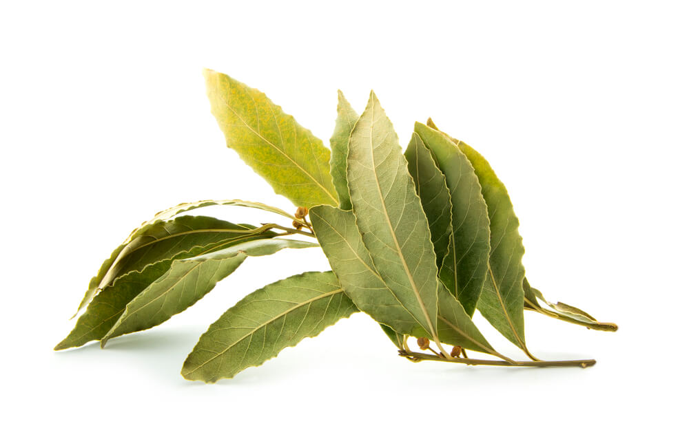 Are Bay Leaves Good for Killing Roaches?