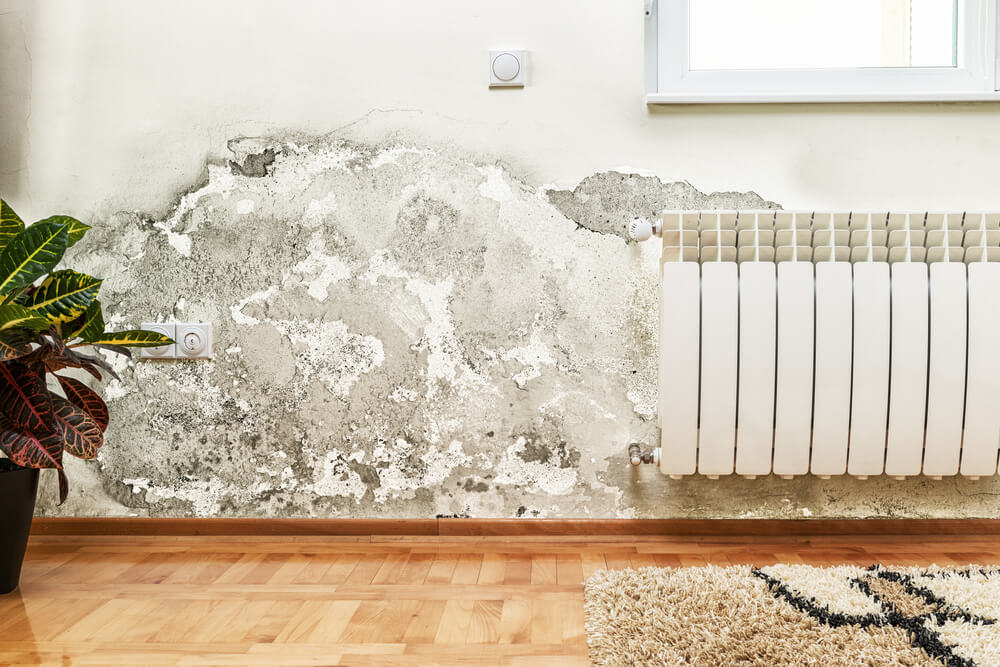 How Long Does It Take For Mold To Grow In Your House?