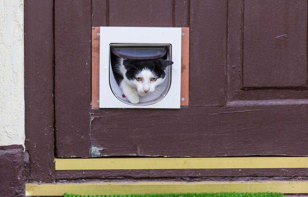How to Install a Cat Flap in a Screen Door