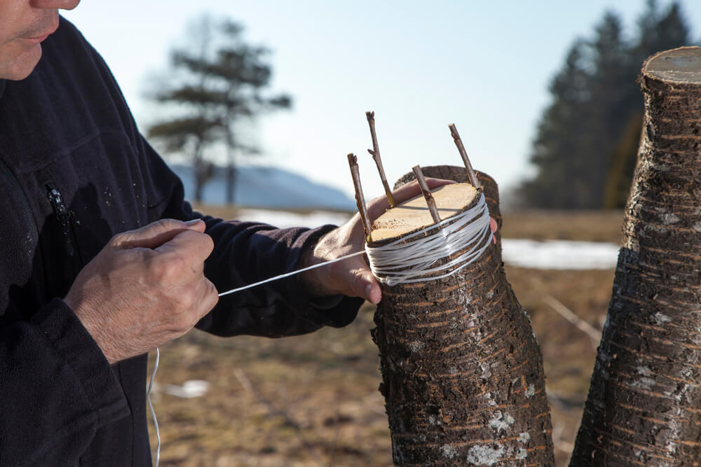 What Is Tree Grafting
