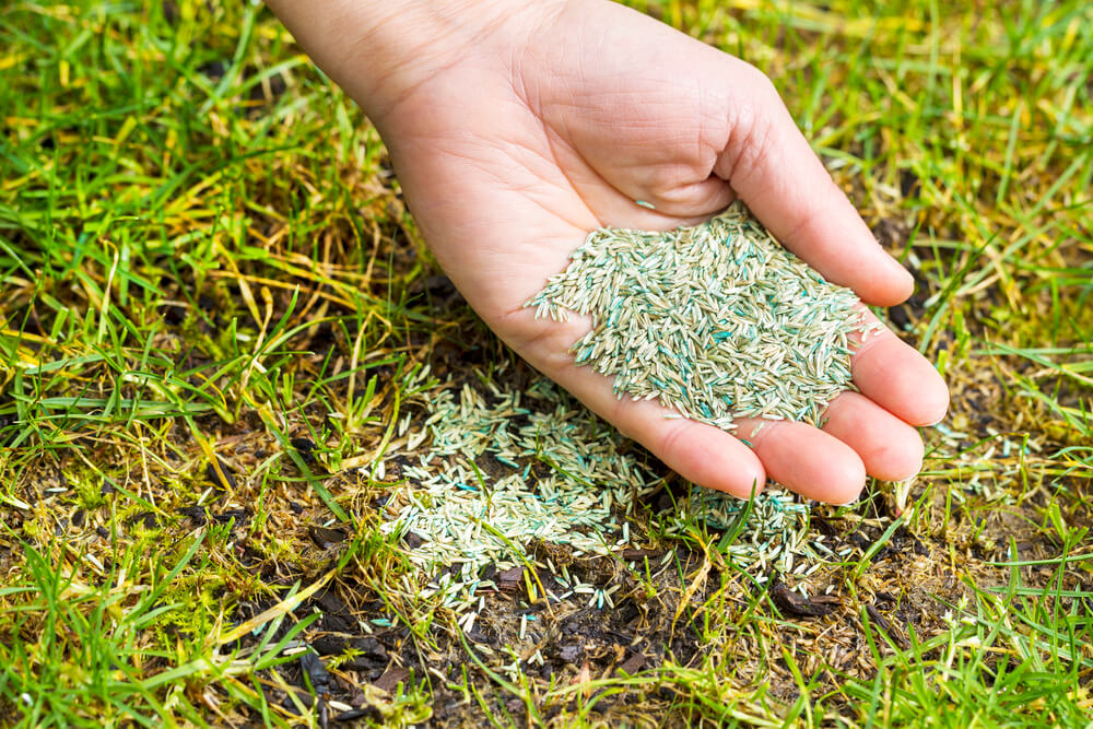 What to Do Before Planting Grass Seed