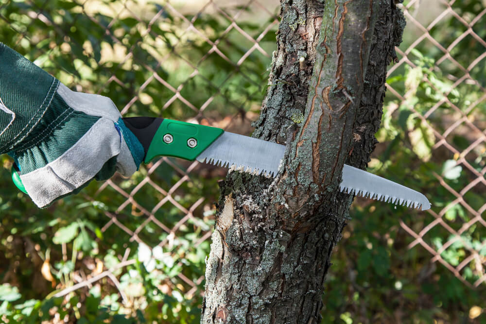 When Is the Best Time to Trim Trees?