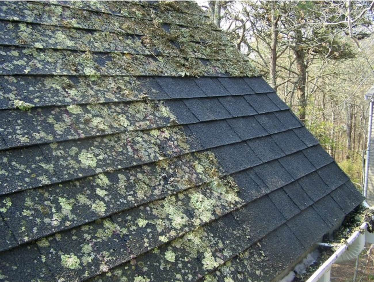 What Is The Best Way To Remove Roof Fungus Answered By A